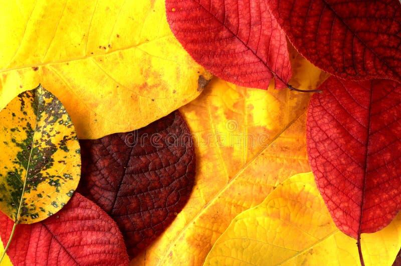 L'automne pousse des feuilles? photographie stock