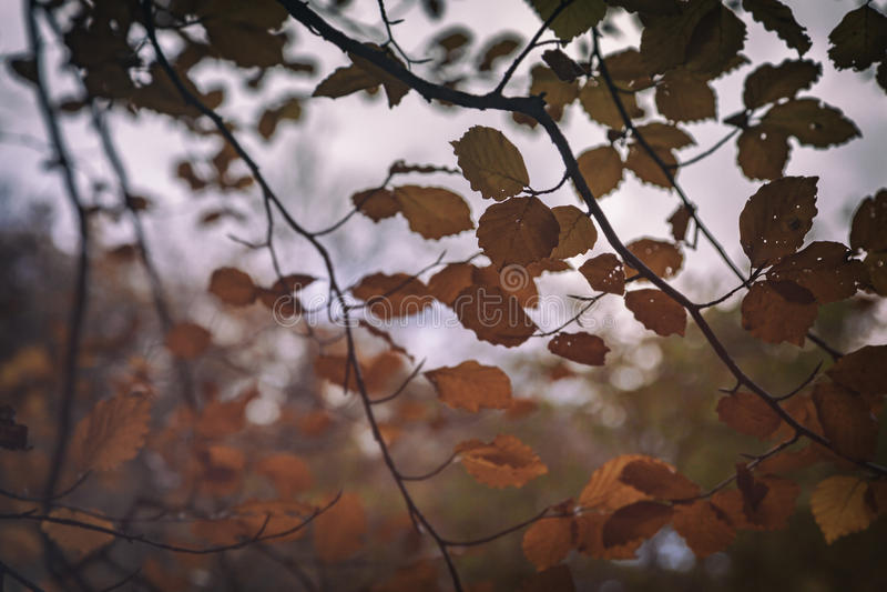L'automne s'embranche fond photographie stock