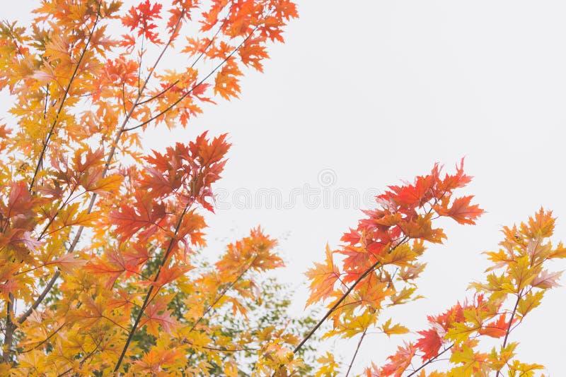 L'automne sentimental et romantique dramatique colore le fond image stock