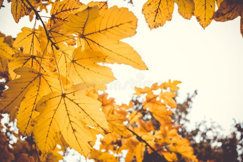 L'automne sentimental et romantique dramatique colore le fond photo libre de droits