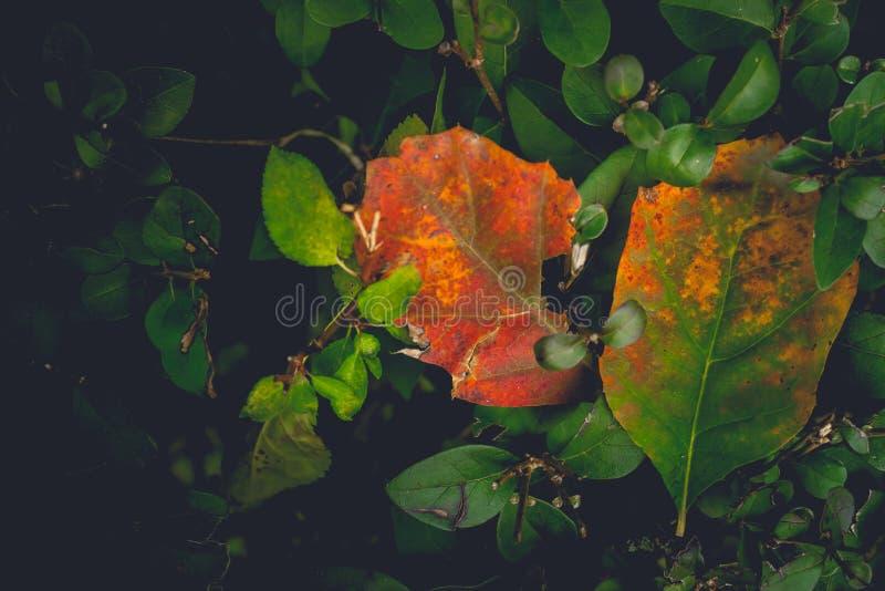 L'automne sentimental et romantique dramatique colore le fond photographie stock