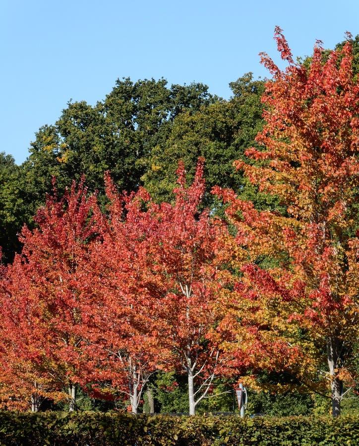 L'automne vient à Basingstoke photographie stock