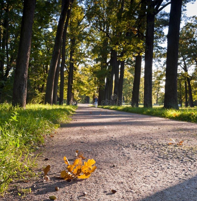 L'automne vient photographie stock