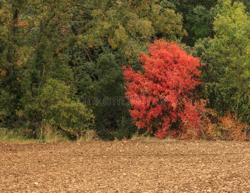 L'automne vient aux forêts de montagne photographie stock