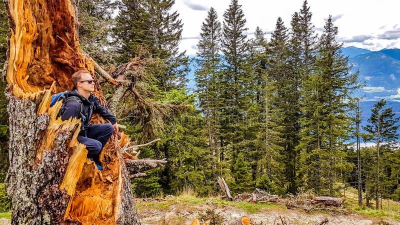 L'Autriche - homme s'asseyant à l'intérieur d'un arbre image libre de droits