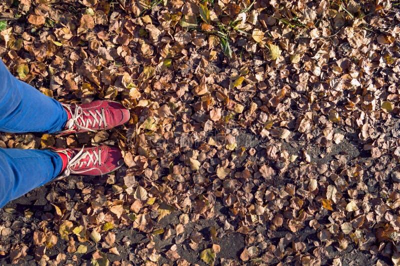 L'autunno è venuto concetto con la femmina in stivali rossi fotografia stock