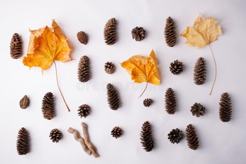 L'autunno arriva Fondo di caduta, concetto di progetto Disposizione piana Fondo minimo Foglia di acero di Yelllow e palnt di legn fotografia stock