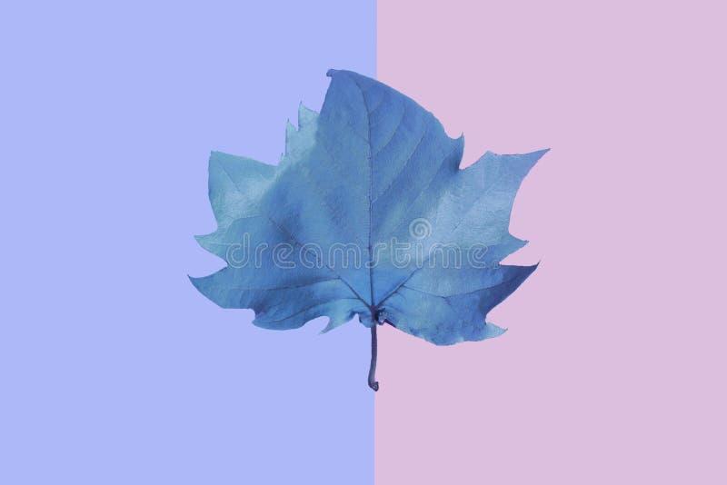 L'autunno arriva Fondo di caduta Disposizione piana immagini stock libere da diritti