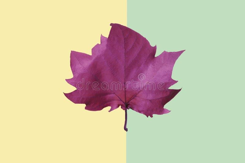 L'autunno arriva Fondo di caduta Disposizione piana fotografie stock
