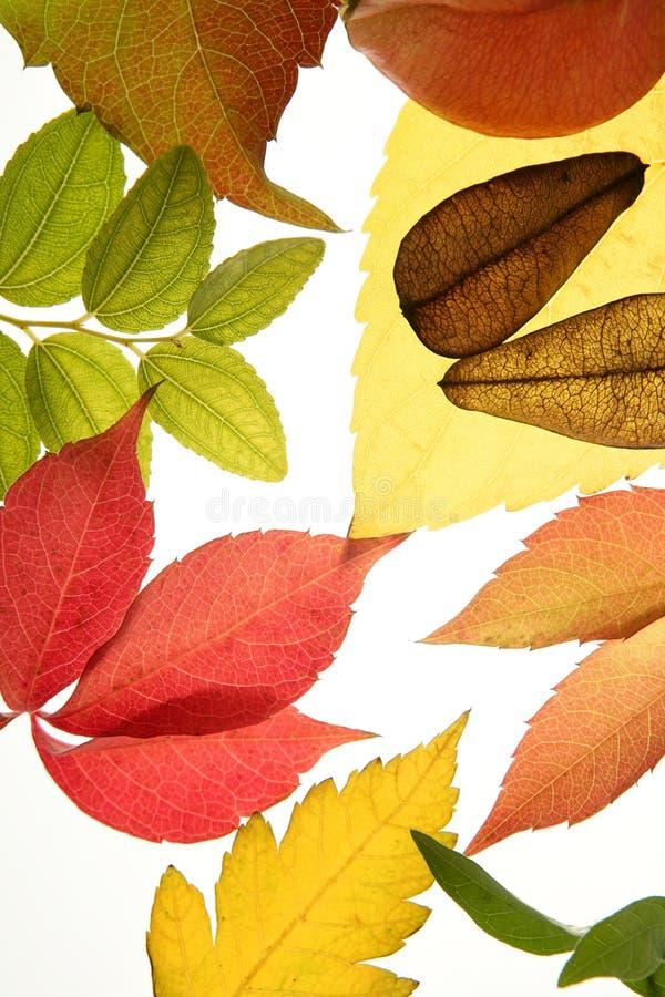 L'autunno, caduta lascia ancora la priorità bassa bianca fotografia stock libera da diritti