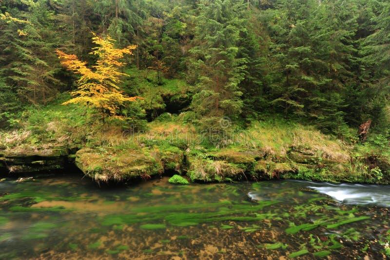 L'autunno colora il fiume fotografia stock