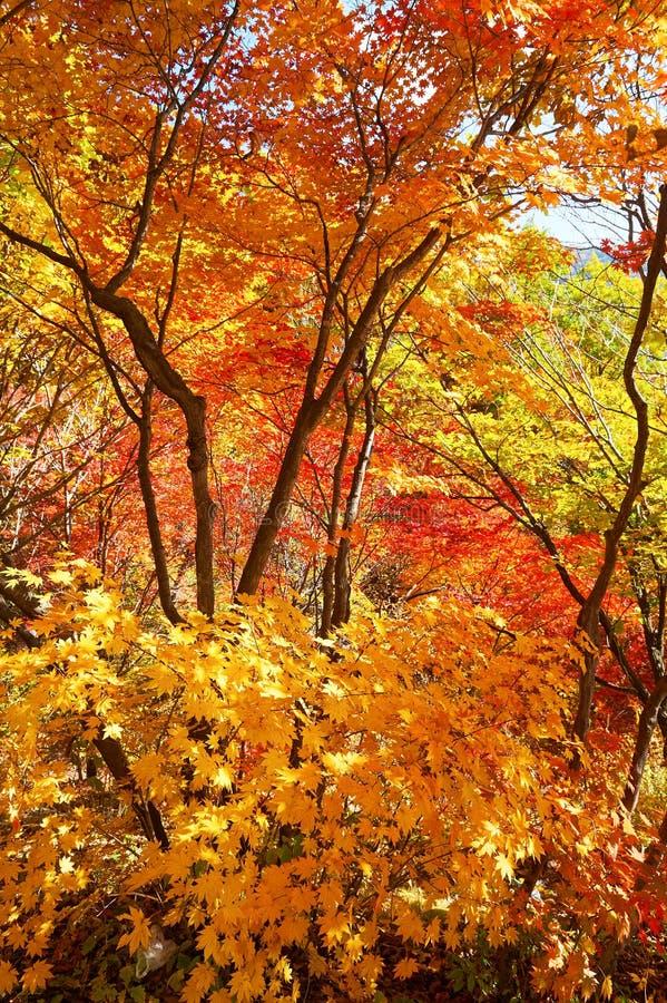 L'autunno del goldenl scenico fotografie stock