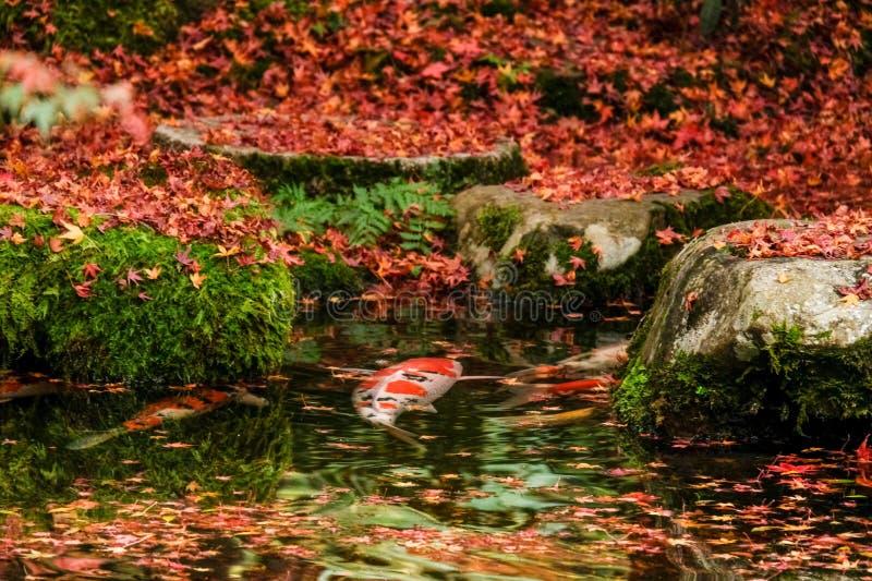 L'autunno di Kyoto lascia Rurikoin immagini stock