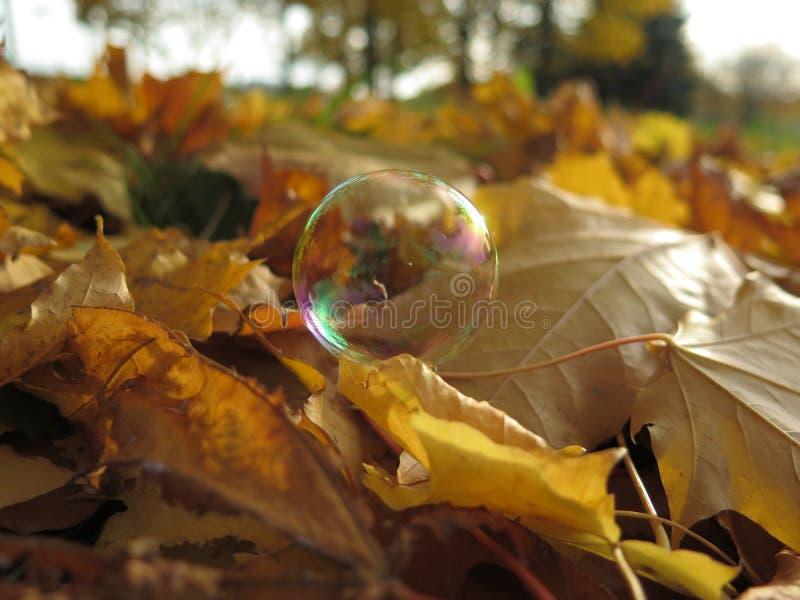 L'autunno dorato è venuto alla nostra città calma fotografie stock libere da diritti