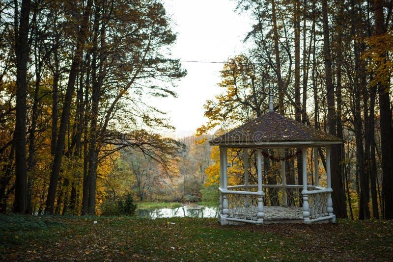 L'autunno dorato, alberi gialli al sole, va sotto i piedi fotografie stock