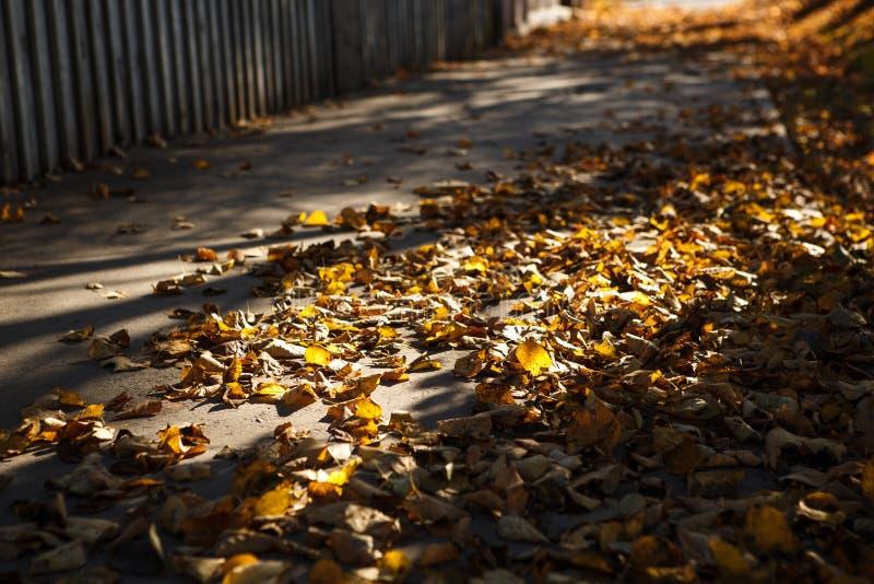 L'autunno dorato, lascia su terra nella luce intensa del sole immagine stock libera da diritti