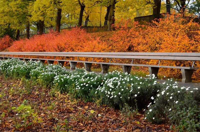 L'autunno ha colorato i cespugli con le foglie luminose ed il banco di legno in un parco della città fotografia stock