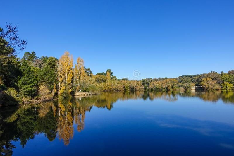 L'autunno ha sparato degli alberi gialli dorati intorno al lago contro cielo blu puro Daylesford, VIC Australia fotografia stock libera da diritti