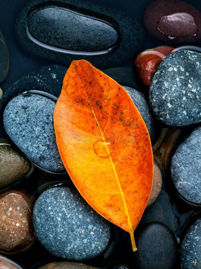 L'autunno, la caduta e lo zen come permesso arancio di concetti cadono sulla st del fiume fotografia stock libera da diritti