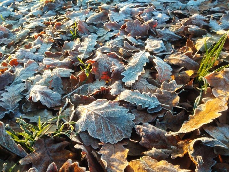 L'autunno lascia la luce del sole del mattino vicina immagini stock libere da diritti