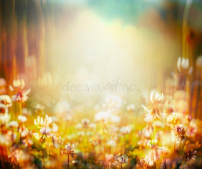 L'autunno o l'estate ha offuscato il fondo della natura con il giacimento di fiori e la luce del tramonto fotografia stock