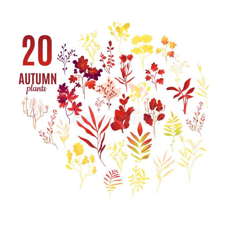 L'autunno pianta e foglie messe con gli elementi decorativi del vario fogliame illustrazione vettoriale