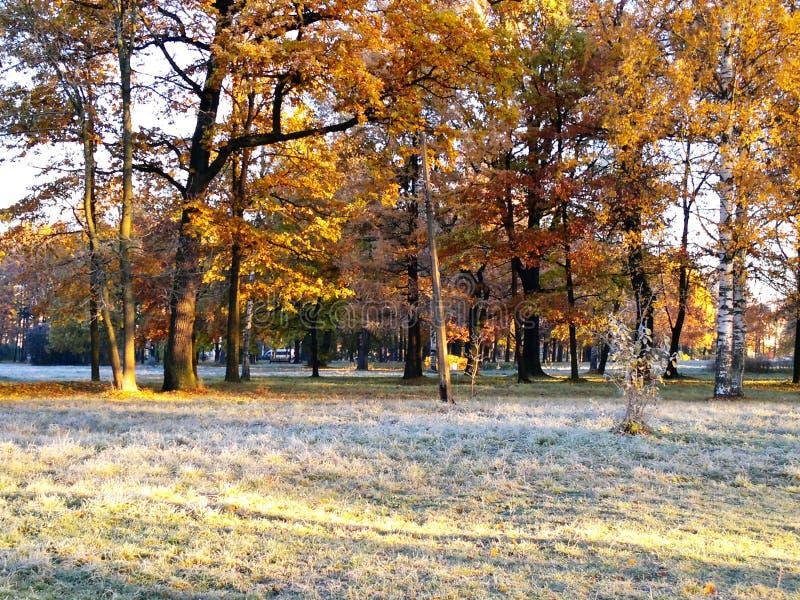 L'autunno tardo fotografie stock libere da diritti