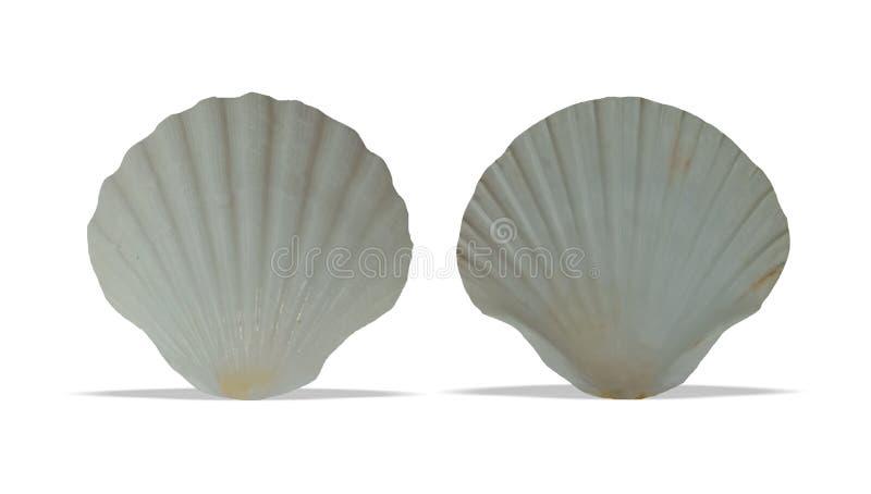 L'avant et le dos de coquille de mer avec le fond blanc wallpaper, photos libres de droits