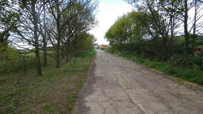 L'avenue des dryades d'arbres a p?trifi? images stock