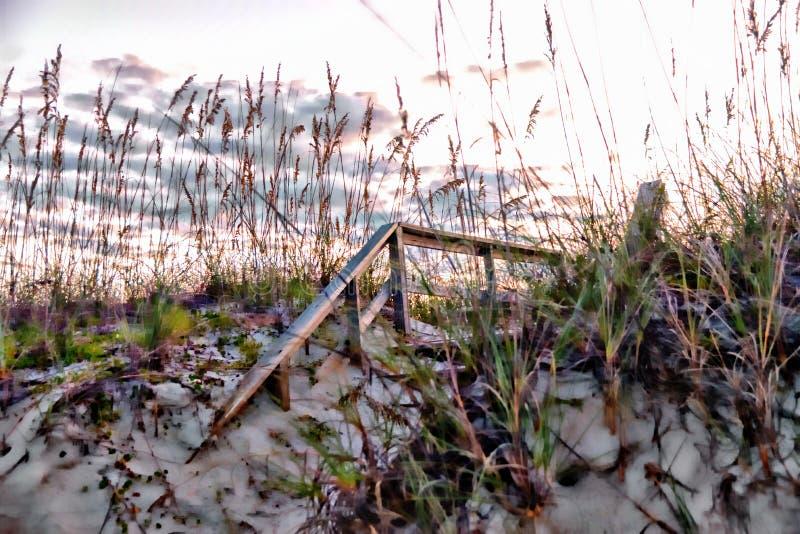 L'avoine de mer agit en tant que rideau d'or sur la dune de sable d'île photo libre de droits