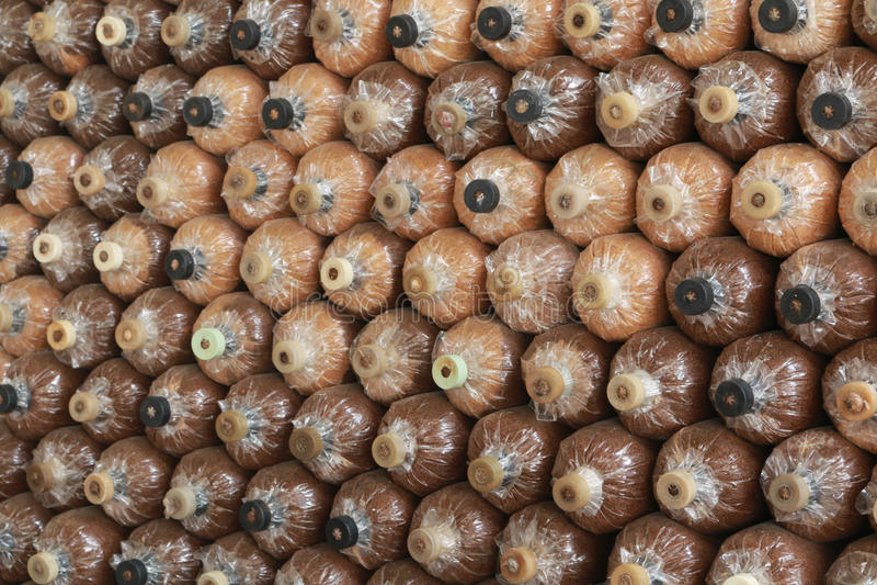 L'azienda agricola del fungo immagini stock