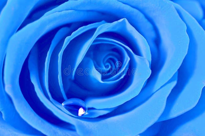 L'azzurro è aumentato immagini stock