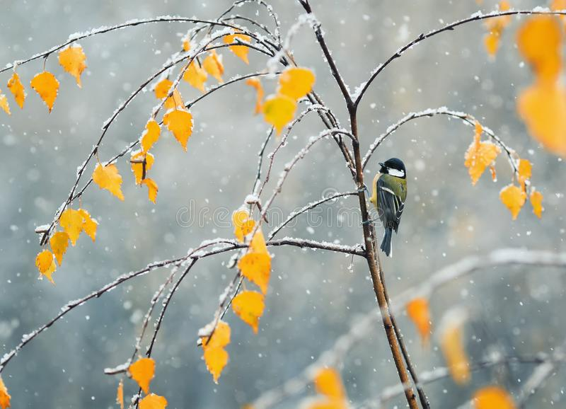 L bird sitting in the late autumn in the Park on a branch of a b. Beautiful bird sitting in the late autumn in the Park on a branch of a birch in the snow stock photos