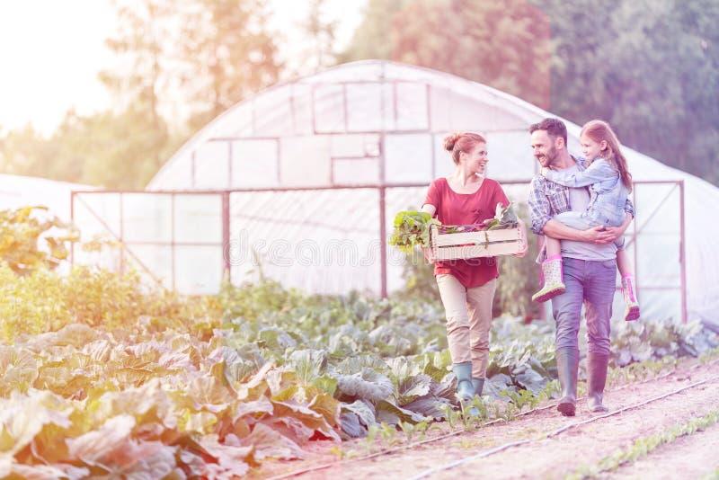 L?chelnde Familie mit dem Gem?se in der Kiste gehend durch Kohlpflanzen am Bauernhof stockbilder