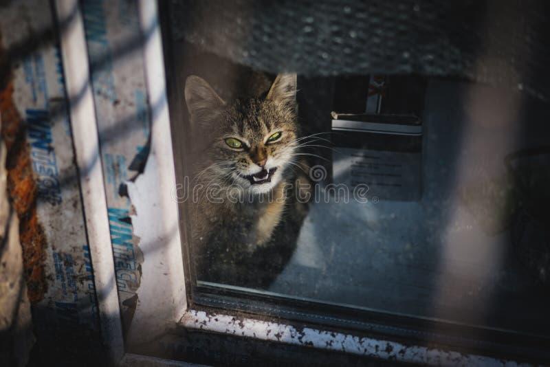 L?chelnde Katze stockfoto