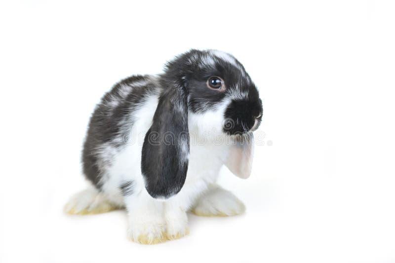 L conejo hermoso imagenes de archivo