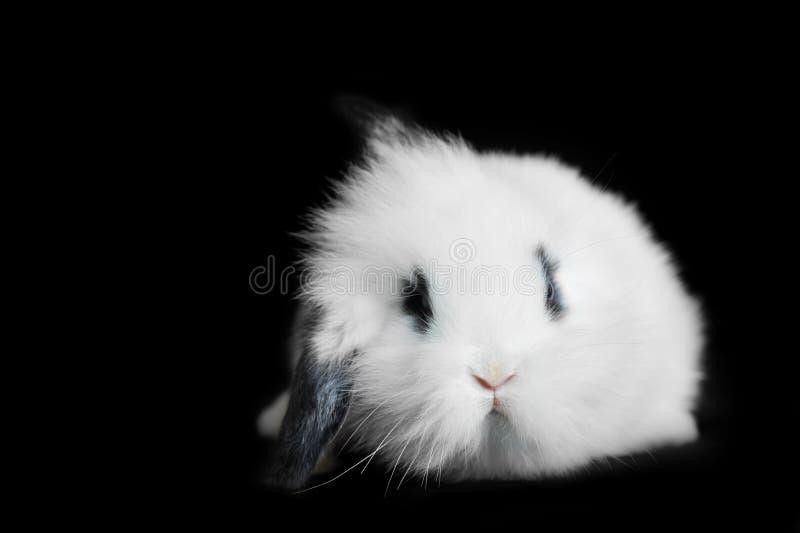 L conejo hermoso fotos de archivo libres de regalías