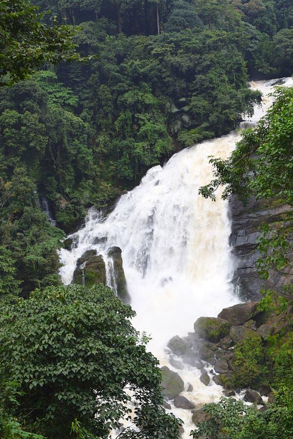 L'eau blanche laiteuse de jaillissement - cascades de Valara dans la forêt épaisse dans Idukki, Kerala, Inde - papier peint natur photo libre de droits