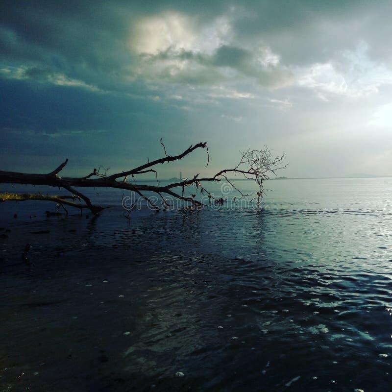 l'eau bleue de trea de mer de beauté photographie stock libre de droits