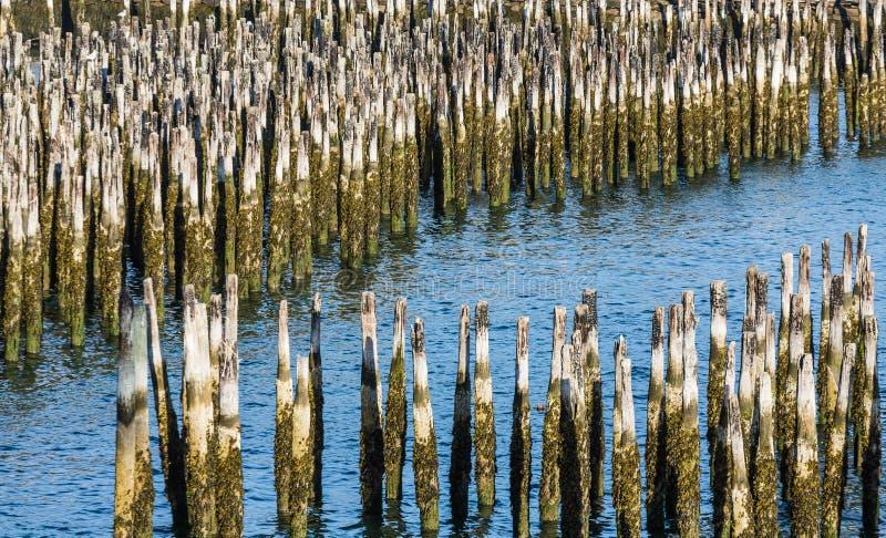 L'eau bleue par de vieux empilages en bois photos libres de droits