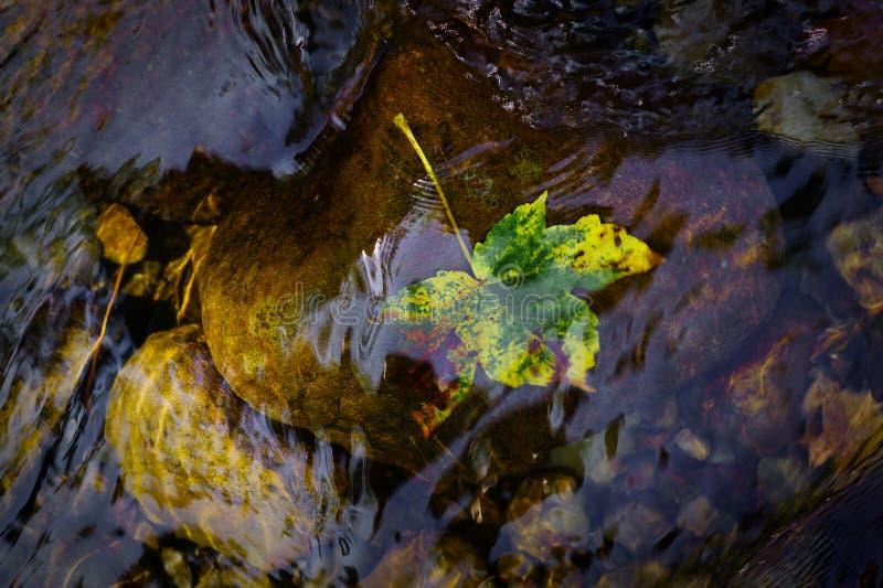 L'eau clair comme de l'eau de roche dans un courant de montagne Une photo à partir du dessus - poussez des feuilles dans des coul images libres de droits