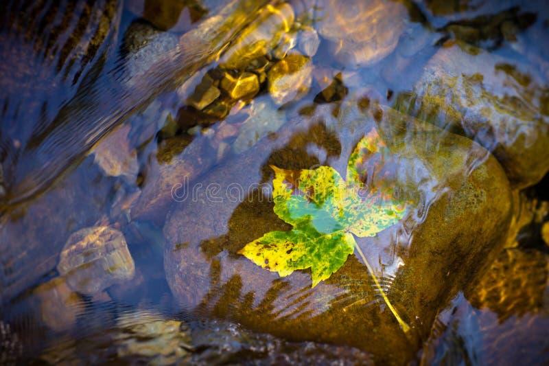 L'eau clair comme de l'eau de roche dans un courant de montagne Une photo à partir du dessus - poussez des feuilles dans des coul photos stock