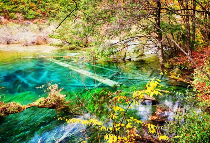 L'eau claire du lac avec les troncs d'arbre submergés parmi des bois de chute images libres de droits