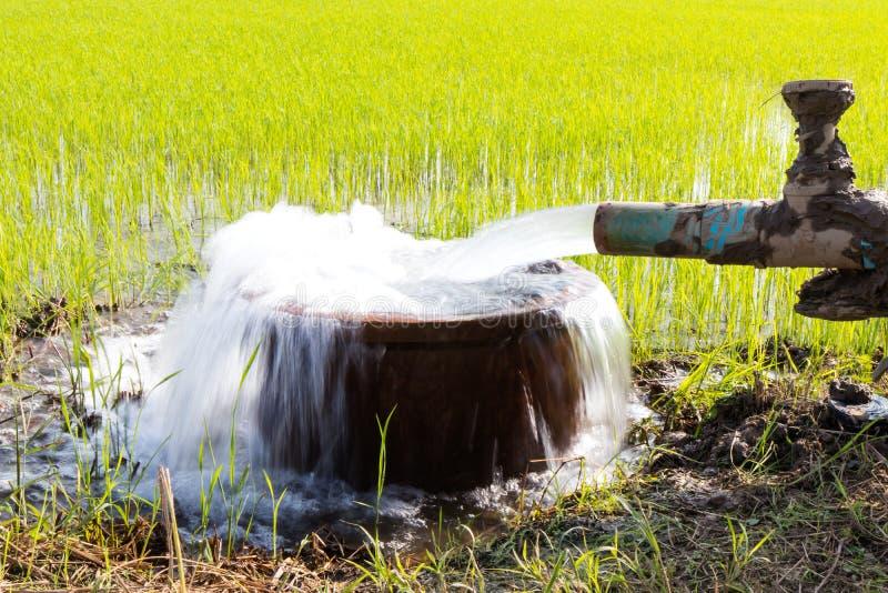 L'eau débordant avec du riz photos libres de droits