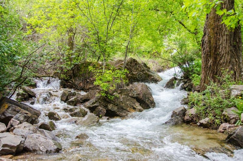 L'eau débordante de montagne photographie stock libre de droits