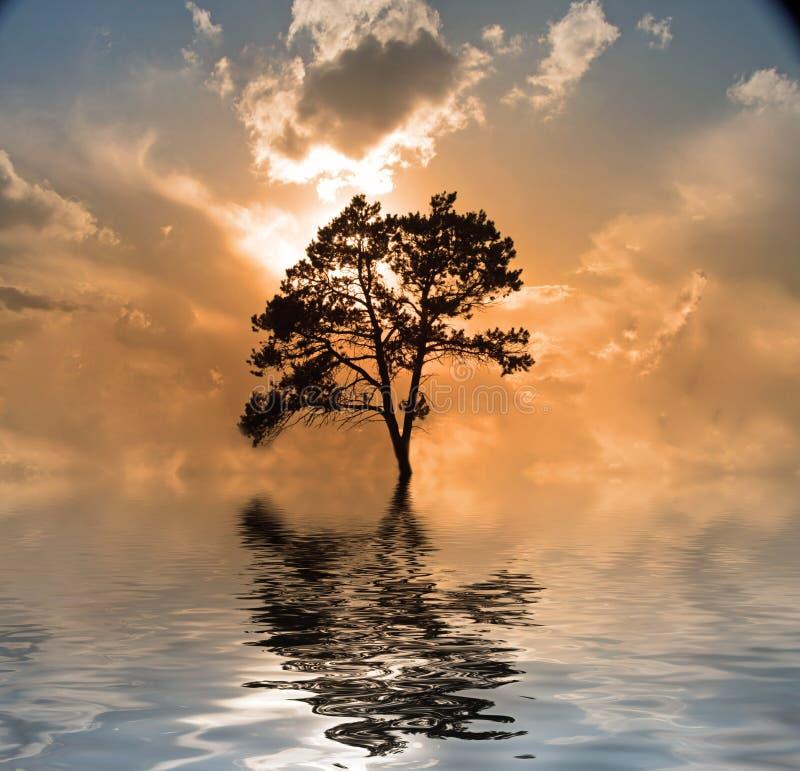 l'eau d'arbre de coucher du soleil illustration stock