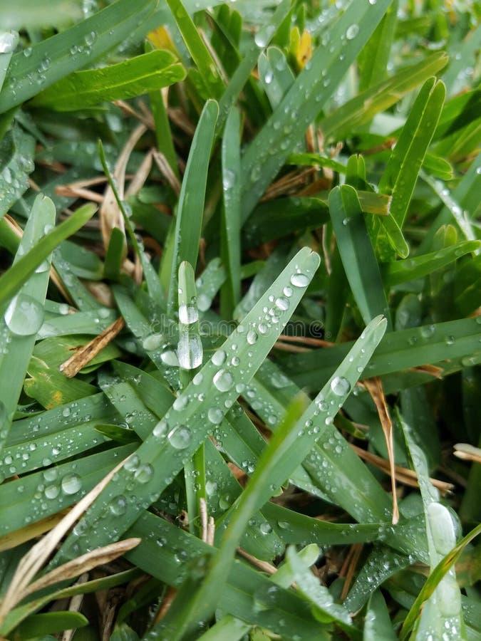 l'eau d'herbe de gouttelettes photo stock