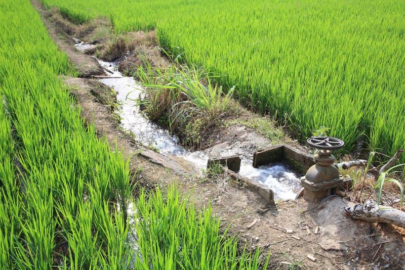 L'eau d'irrigation au gisement de riz images libres de droits