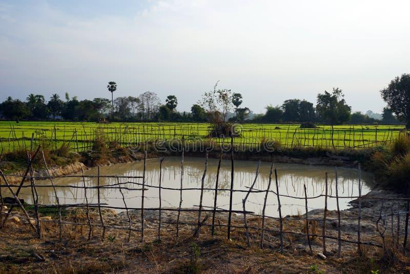 L'eau dans l'étang photographie stock libre de droits