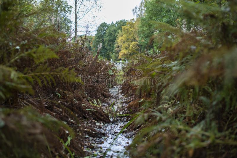 L'eau dans les bosquets d'herbe en parc de ville photographie stock